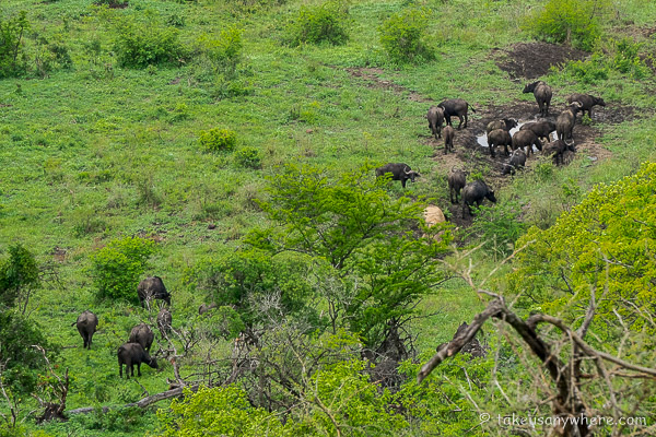photo - ELEPHANT COAST GUESTHOUSE